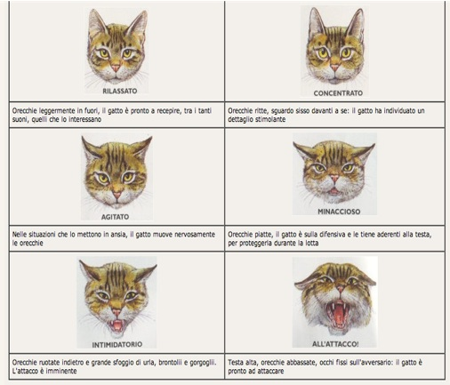La Comunicazione Del Gatto