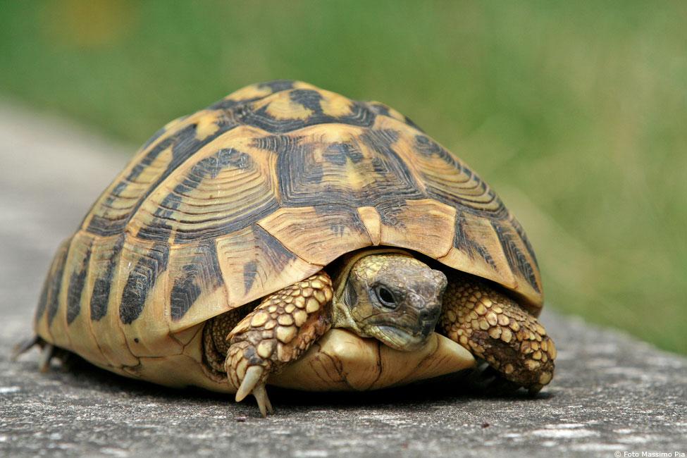 tartarughe pensione per tartarughe