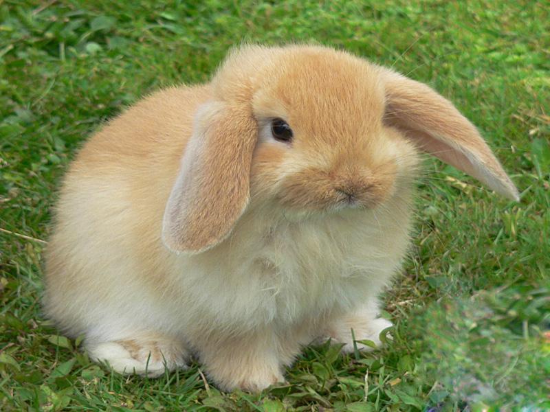 Il Coniglio   Veterinario Per Conigli, Pensione Per Conigli