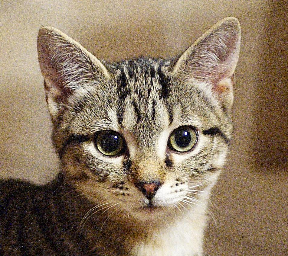 Il gatto pensione per gatti for Gatti con occhi diversi