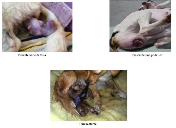 Il Comportamento Sessuale Del Cane Ambulatorio Veterinario